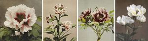Ogawa_kazumasa_some_japanese_flower