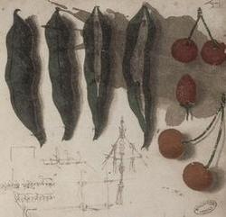 Lonard_de_vinci_manuscrit_1485-1488 Fol 3 recto