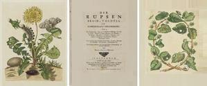 Maria Sibylla Merian, Der rupsen begin, voedzel en wonderbaare verandering, 1713-1717 l
