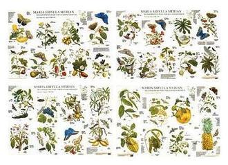 Metamorphosis_insectorum_ surinamensicum by Maria Sybilla Merian