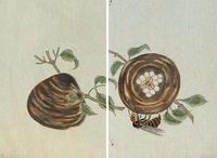 千虫譜 山バチノ巣