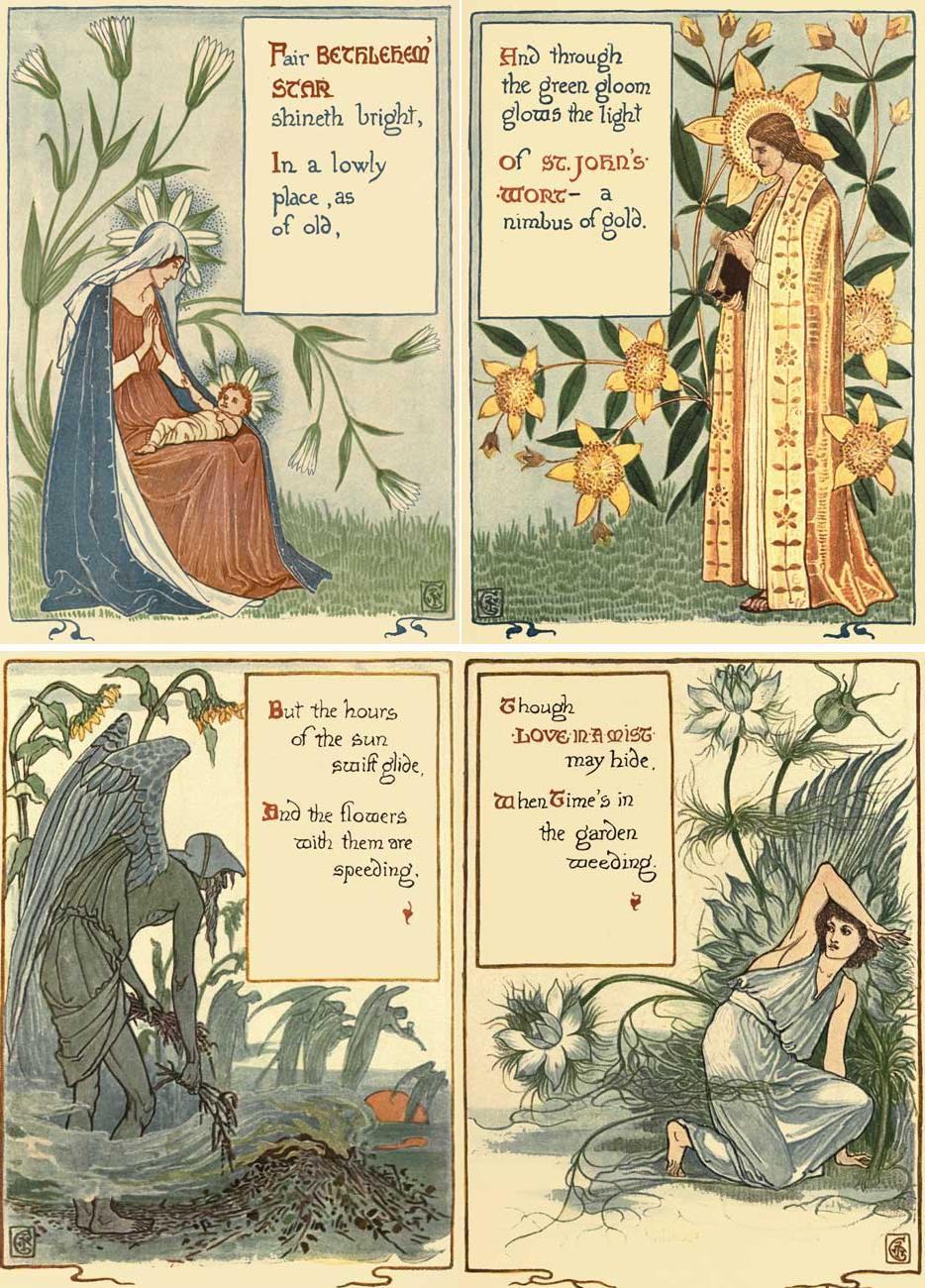 BETHLEHEM' STAR ,ST. JOHN'S-WORT,LOVE-IN-A-MIST